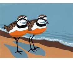 View Madagascar Plovers Bird Fair By Robert Gillmor; Access more artwork lots and estimated & realized auction prices on MutualArt. Watercolor Paintings Abstract, Watercolor Bird, Painting & Drawing, Watercolor Portraits, Watercolor Landscape, Acrylic Painting Inspiration, Bird Illustration, Bird Drawings, Linocut Prints