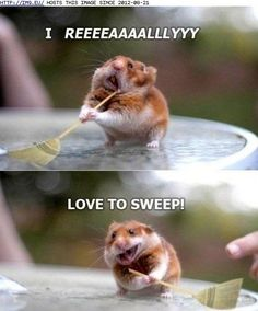 Fun Facttsssss Male hamsters tend to live longer than females ! Syrian hamsters come in 40 colors ! Animal Captions, Funny Animals With Captions, Funny Animal Jokes, Cute Funny Animals, Funny Cute, Funny Memes, Super Funny, Animal Humor, Funny Hamsters