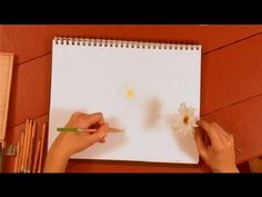 ▶ How to Draw Daisies With a Colored Pencil : How to Draw with Colored Pencils - YouTube