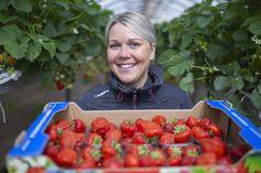 Nyt sitä saa! Päättäjäiskakun kruunaavat kotimaiset mansikat | Yle Uutiset | yle.fi Strawberry, Fruit, Food, Essen, Strawberry Fruit, Strawberries, Yemek, Meals