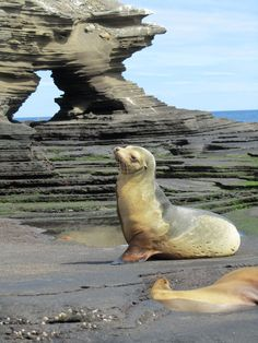 the wild life in the Galapagos Islands is absolutely beautiful <3