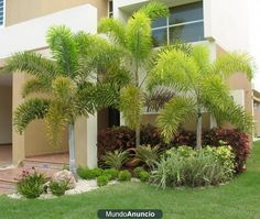 I love foxtail palms! Tropical Pool Landscaping, Florida Landscaping, Outdoor Landscaping, Front Yard Landscaping, Palm Garden, Tropical Garden, Home And Garden, Small Gardens, Outdoor Gardens