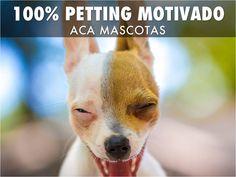 Petting es una línea de alimentos para perros y gatos con una excelente relación Precio - Calidad de Producto.  Su Fórmula contiene materias primas naturales cuidadosamente seleccionadas. Además, es elaborado con tecnología de última generación y bajos los más estrictos controles de calidad