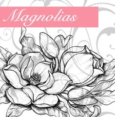 Add a humming bird and this would be a perfect tattoo in remembrance of my Granny Skin Art, Magnolia Tattoo, Tattoos, Art Drawings, Art Tattoo, Drawings, Flower Drawing, Art, Flower Sketches