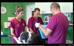 Jacek Szulc clinic for small animals #lodz #weterynarz