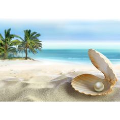 Tropical Beach ❤ liked on Polyvore featuring backgrounds