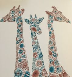 Giraffes Millie Marotta Animal Kingdom coloured in primsacolour, gentle beauties!