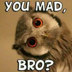You Mad, Bro, Animals, Animaux, Animales, Animal, Dieren