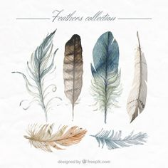Hand painted feathers collection Free Vector