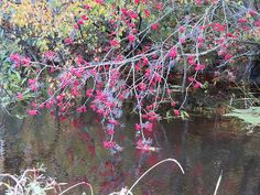 Pihlakas - Veeseire Water, Photos, Gripe Water, Pictures