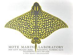 Stingray Ad Poster - Mote Marine Laboratory Sarasota, Florida