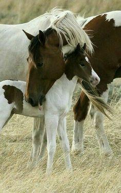 All The Pretty Horses, Beautiful Horses, Animals Beautiful, Simply Beautiful, Beautiful Family, Beautiful World, Painted Horses, Baby Horses, Wild Horses
