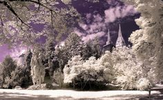 IR Zagreb Ribnjak__Croatia by Darko Gereš on Used Cameras, Beautiful Park, World Photography, Croatia, Cathedral, Cool Photos, Earth, Explore, Pic Pic