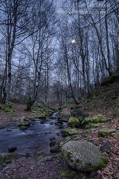 El bosque crepuscular y nocturno – Chavinandez Photo