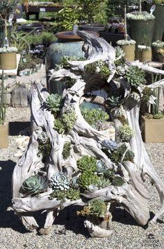 26 propostas de jardins de suculentas ideais ao redor do mundo # Succulentgardenideas # Su - Garten Dekoration - Driftwood Planters, Diy Planters, Driftwood Ideas, Driftwood Crafts, Succulent Gardening, Planting Succulents, Organic Gardening, Dream Garden, Garden Art