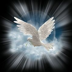 O' Holy Spirit, guide us in your wisdom Dove Images, Dove Pictures, Angel Pictures, Pictures Of Jesus Christ, Religious Pictures, Religious Art, Holy Spirit Images, Image Jesus, Jesus Art