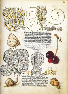 S for Snail: Mira Calligraphiae Monumenta: A century calligraphic manuscript inscribed by Georg Bocskay and Illuminated by Joris Hoefnagel. Illuminated Letters, Illuminated Manuscript, Botanical Illustration, Botanical Prints, Fruit Illustration, Botanical Drawings, Beatrix Potter, Getty Museum, Medieval Manuscript