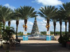 Christmas in Camana Bay! Merry Christmas everyone!  :-)