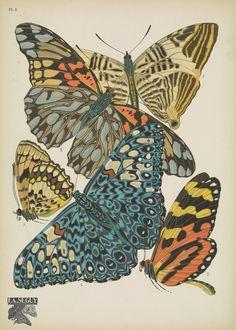 https://flic.kr/p/CNePwB   n10_w1150   Papillons;. Paris,Tolmer[ca. 1925]. biodiversitylibrary.org/page/48852987