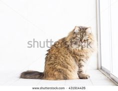 new @shutterstock #kittens #pets #animals #cute #gatti #whelp #little #feline#puppies #siberian #meow #cubs #cats