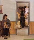 Dog at vet's office