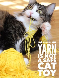 Whilst you'll see many cute pictures of cats and kittens playing with a ball of yarn on the internet....A Ball of Yarn IS NOT a Safe Cat Toy!