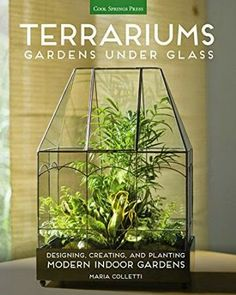 Booktopia has Terrariums - Gardens Under Glass, Designing, Creating, and Planting Modern Indoor Gardens by Maria Colletti. Buy a discounted Paperback of Terrariums - Gardens Under Glass online from Australia's leading online bookstore. Buy Terrarium, How To Make Terrariums, Succulent Terrarium, Succulents Garden, Twig Terrariums, Hanging Glass Terrarium, Succulent Gardening, Suculentas Diy, Indoor Planters