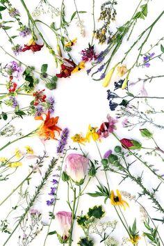 Helpful Organic Gardening Information, Advice, And Tips – Flowers and Gardening Flower Backgrounds, Wallpaper Backgrounds, Wallpapers, Wild Flowers, Beautiful Flowers, Flower Spray, Flower Art, Planting Flowers, Flower Arrangements