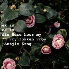 Afrikaans Quotes, Cute Bears, Make Me Smile, Captions, Poems, Wallpapers, Feelings, Future, Female