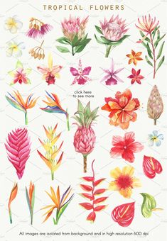 Set of high quality handpainted watercolor tropical leaves and flowers included 60 elements. Tropical Flowers, Tropical Art, Tropical Leaves, Exotic Flowers, Tropical Paintings, Watercolor Flowers, Watercolor Paintings, Watercolour, Flower Art