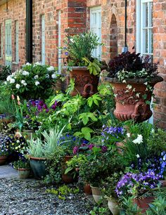 37 Beautiful Garden Pictures For You Green colours are great for human eyes and offer many fabulous green colour hues that allow to add depth to natural garden design and beautify… Garden Cottage, Garden Pots, Potted Garden, Potted Plants, Flowering Plants, Container Plants, Container Gardening, Container Flowers, Plantas Indoor