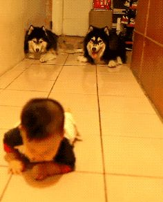 Funny pictures about Dogs imitate crawling baby. Oh, and cool pics about Dogs imitate crawling baby. Also, Dogs imitate crawling baby. Animals And Pets, Baby Animals, Funny Animals, Cute Animals, I Love Dogs, Cute Dogs, Cute Babies, Funny Videos, Gifs Hilarious