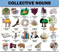 Collective Nouns in English English Primary School, English Grammar For Kids, Teaching English Grammar, English Games, English Resources, English Classroom, English Sentences, English Idioms, English Lessons