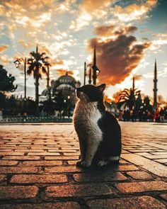 Being a street cat in Istanbul by Omer Yesilir . Istanbul City, Istanbul Travel, Animals And Pets, Baby Animals, Cute Animals, Cute Cats, Funny Cats, Cat Fun, Cat Photography