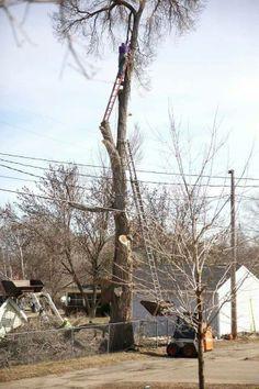 Stunt man tree cutting down. Huh??