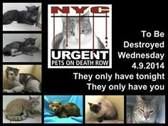 NYC KILL LIST For Tomorrow, April 9'14.  All These Beautiful Cats - SHAMEFUL NYC!!  pls pin.thank you Types Of Animals, Cute Animals, Disabled Dog, In Dire Need, Kill List, Animal Rescue Site, Left Alone, Change Is Good, Animal Rights