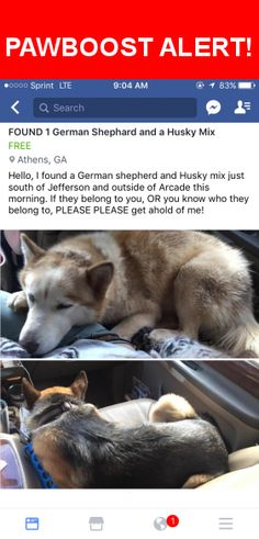 Is this your lost pet? Found in Arcade, GA 30549. Please spread the word so we can find the owner!  FOUND!!  German Shepherd and Husky Mix  Hello, I found these two pups this morning just south of Jefferson in Arcade. If these two belong to you, or you know who they belong to PLEASE get in contact with me!! Thank you!!  Near Athens Hwy & Wyatt St