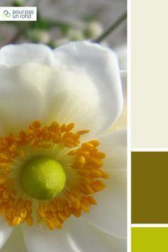 Palette gris, kaki et vert. Trouve la palette de couleurs idéale pour ta marque à l'aide de ce tutoriel pas à pas. Name List, Aide, Color Charts, Color Palettes, Drawings, Plants, Names, Inspiration, Photos