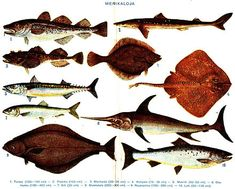 Types of fish saltwater – A Selection of Pins about Animals Saltwater Aquarium Fish, Saltwater Fishing, Salt Water Fish, Salt And Water, Peixes Tetra, Fish Chart, Florida Fish, Fish Stock, Pet Fish