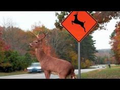 Please Move The Deer Crossing...i laughed so hard i was crying lol