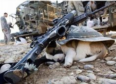 This Puppy, found in Afganistan, was adopted by a US soldier and is now living in the states
