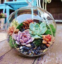 Sunshine & Succulents | Terrariums | San Francisco