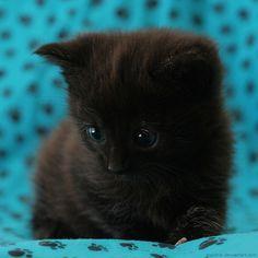 Little Kruemel by *hoschie:)