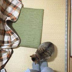わが足元でまるまる猫かわいや #naro #cat by tetsuotakashima