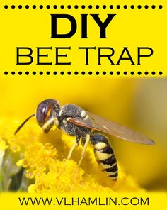 save yourself bees   ... Bees on Pinterest   Bee Repellent, Keep Bees Away and Get Rid Of Wasps