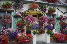 """Berck-Plage, Pas-de-Calais (62) : """" fleurs """" by (vincent desjardins)"""