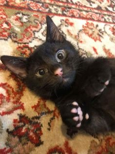 Kitten Perfect Pink Beans