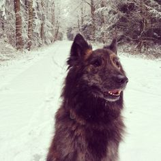 Happy! It snowed! | Flickr - Photo Sharing!