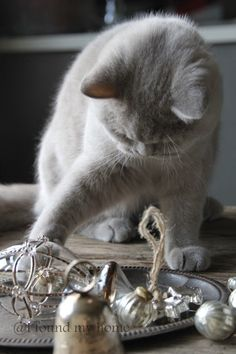 kitten playing with ornaments