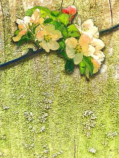 'Apfelblüte' von Dirk h. Wendt bei artflakes.com als Poster oder Kunstdruck $19.41